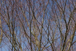 Bare winter branches