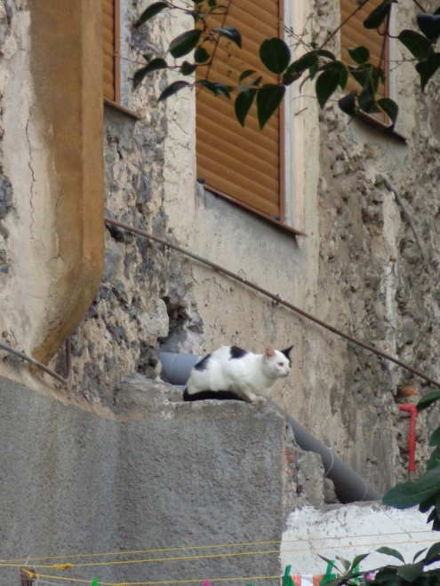 Wild cats in Mundaka