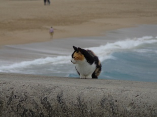 Cats and surfers coexist at La Zurriola surf beach