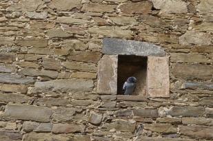 Seen at Ehrenbreitstein fortress