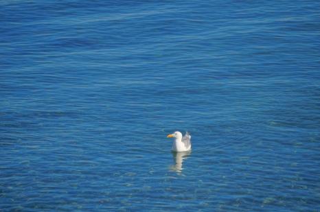 Seagull at Alki