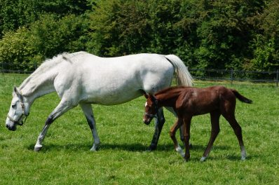 Mare with foal, near Sibbe
