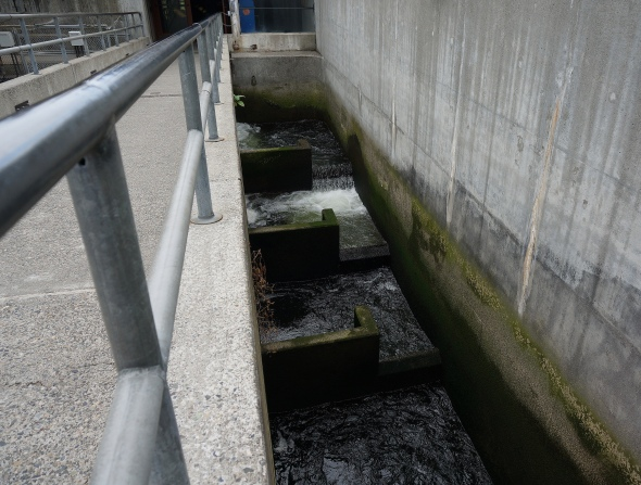 Fish ladder at the locks