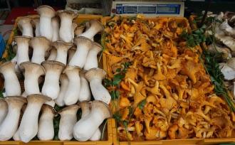 It's mushroom season.