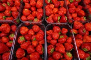 Mmmm, fresh erdbeeren!