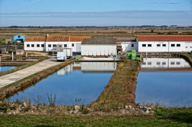 Oyster farms in the salt marshes along the Charente river