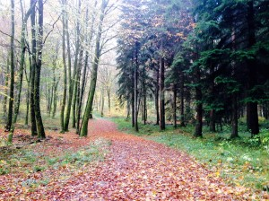 Fall leaves in the Chailluz forest near Besancon