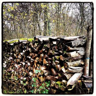 Firewood stack in the forest of Chailluz