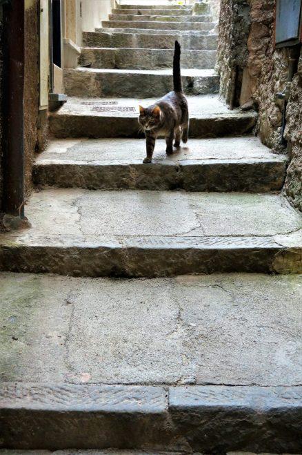 A feline friend in Vernazza