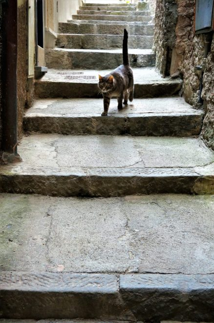 A feline friend in Vernazza