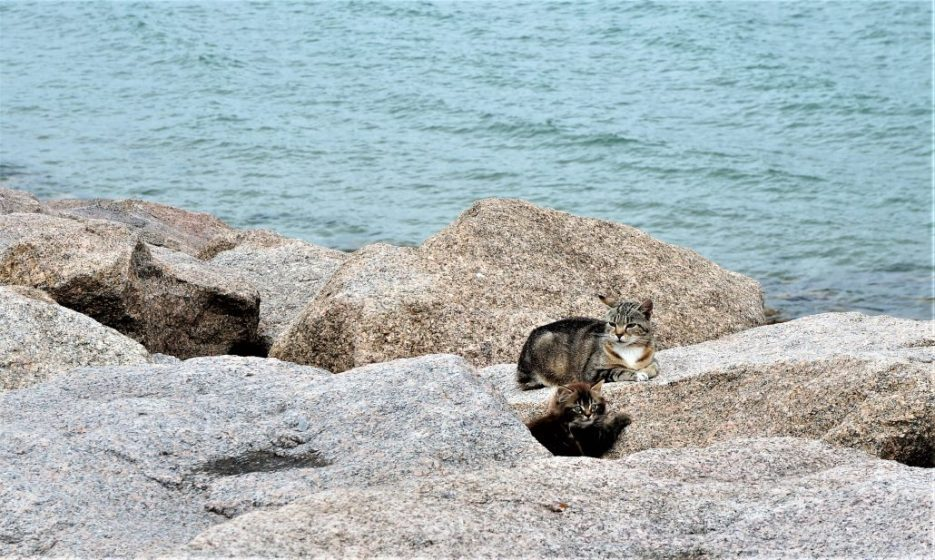 Feral cats on the shore near Cherbourg, France