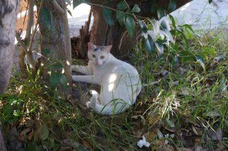 A shady spot in Aegina