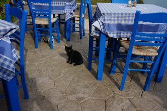 A kitty looking for some treats, Agia Marina