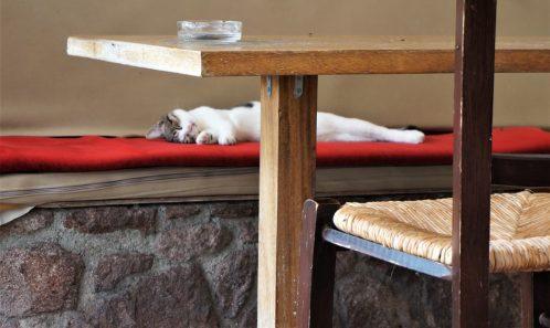 Happy cat in Perdika